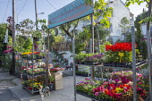 Garden centre in Corfu, plant sale