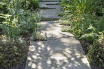 Hostas, Geranium himalayense 'Derrick Cook', Pittosporum tobira 'Nanum' and ferns in shady border by stone path, dappled shade, Thymus Coccineus Group in cracks