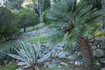 Dry-stone wall terraces, Agave americana 'Variegata'