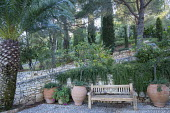 Large terracotta urns by wooden bench, stone walls, Rosmarinus officinalis 'Prostratus'