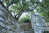 Stone steps and walls, pittosporum