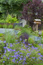 Salvia nemorosa 'Caradonna' and geranium in sloping border, large rocks, wooden bird table