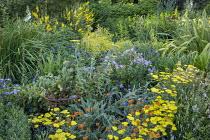 Phormium 'Yellow Wave', Achillea 'Moonshine', Erysimum 'Apricot Twist', geranium
