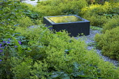 Raised square infinity pool on gravel terrace surrounded by carpet of Alchemilla mollis