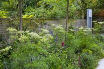 Selinum wallichianum, Trachelospermum jasminoides climbing on wooden fence, Amelanchier 'Robin Hill', water wall, Erigeron karvinskianus, Agastache 'Blackadder', Penstemon 'Raven'