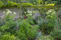 Agastache 'Blackadder', Selinum wallichianum, Penstemon 'Raven', Erigeron karvinskianus