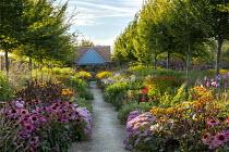 View along path to pavilion, double perennial borders, Echinacea purpurea, Hylotelephium spectabile Brilliant Group 'Brilliant' syn. sedum, Ligularia 'Britt Marie Crawford'