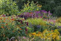Cutting garden, Zinnia elegans, Cleome hassleriana, amaranthus, Ageratum houstonianum 'Blue Horizon', Tithonia rotundifolia 'Fiesta del Sol', Helianthus annuus 'Ring of Fire'