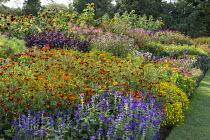 Colourful border of annuals, tagetes, amaranthus, Salvia viridis, Helianthus annuus 'Ring of Fire'