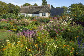 Thatched cottage, border of colourful annuals, Salvia viridis, nicotiana, cleome