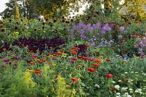 Cutting garden, Zinnia elegans, Cleome spinosa 'Violet Queen', amaranthus, Tithonia rotundifolia 'Torch', Helianthus annuus 'Ring of Fire'