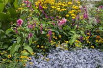 Persicaria orientalis, Aster pyrenaeus 'Lutetia', Rudbeckia laciniata 'Herbstsonne', Heliopsis helianthoides var. scabra 'Summer Nights', Dahlia 'Otto's Thrill', miscanthus