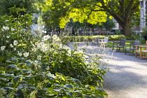 Anemone x hybrida 'Honorine Jobert', Persicaria amplexicaulis 'Alba', benches