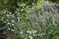 Persicaria amplexicaulis 'Alba', Nicotiana 'Whisper Mixed'