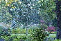 Camellia, Skimmia confusa 'Kew Green', Euonymus alatus 'Compactus'