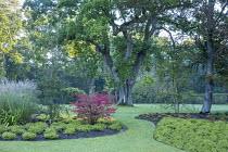 Euonymus alatus 'Compactus', carpet of heather, oak tree, grass path, island beds