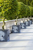 Row of spiral stemmed standard bay lollipop trees in square zinc containers on stone terrace, stone balustrade
