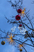 Christmas decorations and lights hanging in tree, angels and baubles