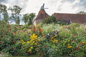 Dahlia, rudbeckia and canna in the Solar garden, oast houses