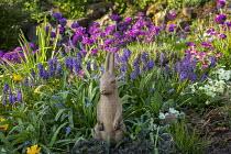 Hare ornament in spring border, muscari, Primula denticulata, Primula vulgaris