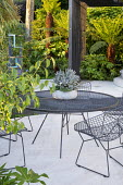 Metal table and chairs on poured concrete patio, Kalanchoe tomentosa in pot, Dicksonia antarctica, Fatsia japonica