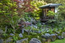 Japanese pavilion in shady garden, rocky waterfall, Iris 'Caesar's Brother', Acer palmatum, Pachysandra terminalis, Houttuynia cordata, Enkianthus campanulatus, Leucobryum juniperoideum moss balls