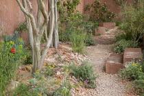 Gravel path through mediterranean garden, Lagerstroemia indica
