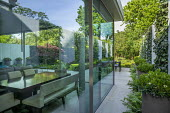 Side return passage, glass wall, limestone paving, Pittosporum tobira in tall containers