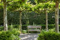 Wooden bench by Gaze Burvill on stone sett paving under umbrella-pleached plane tree espaliers, yew hedges