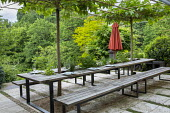 Outdoor kdining area, pleached mulberry espalier trees above wooden benches and table with tomatoes and herbs
