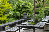 Outdoor dining area, pleached mulberry espalier trees above wooden benches and table with tomatoes and herbs