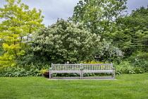 Wooden benches, robinia, aralia, quercus