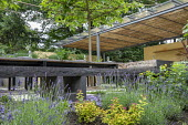 Outdoor kitchen and dining area, pleached mulberry espalier trees above wooden benches and table with tomatoes and herbs, lavender