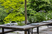Outdoor dining area, pleached mulberry espalier tree above wooden benches and table with tomatoes and herbs, wine glasses