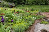 Terraced border, Papaver orientale (Goliath Group) 'Beauty of Livermere', Euphorbia oblongata, Euphorbia griffithii 'Dixter', Iris 'Quechee' and 'Sable', Lupinus 'Masterpiece', Euphorbia seguieriana s...