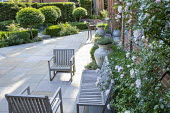 Wooden chairs on York stone paving, Prunus lusitanica 'Angustifolia' standard lollipop trees, low clipped box hedges, dog statue, Rosa 'New Dawn'
