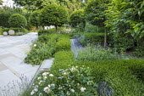 Prunus lusitanica 'Angustifolia' standard lollipop trees, low clipped box hedges, Yorkstone paving, Lavandula angustifolia 'Munstead', astrantia, roses, geranium