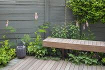 Digitalis purpurea 'Sutton's Apricot', wooden bench, decking, Selinum wallichianum, Alchemilla mollis, Trachelospermum jasminoides