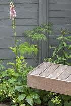 Digitalis purpurea 'Sutton's Apricot', Selinum wallichianum, Alchemilla mollis, wooden bench, grey painted fence