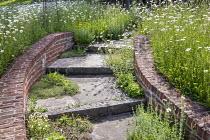 Brick-edged steps, pulsatilla, Acaena microphylla 'Copper Carpet', Leucanthemum vulgare meadow