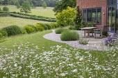 Leucanthemum vulgare by lawn, table and bench on stone patio by house, lavender in gravel