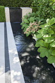 Rodgersia by formal rill and waterfall