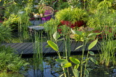 Black bridge across pond, Hakonechloa macra in large red container, Cyperus papyrus, Imara Bizzie Lizzies, Ficus carica, chair on terrace, equisetum