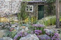 Erigeron glaucus 'Sea Breeze' amongst rocks in coastal garden, shell wall