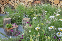 Cut log stools on stone patio, honesty seedheads, potentilla, cirsium, Leucanthemum vulgare