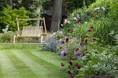 Wooden swing seat on terrace, roses, alliums, nepeta, geraniums