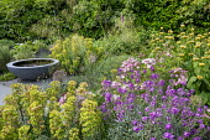 Erysimum 'Bowles Mauve', Phlomis russeliana, raised pool in container, Stipa gigantea, euphorbia, roses