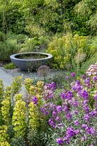 Erysimum 'Bowles Mauve', raised pool in container, Stipa gigantea, euphorbia, roses