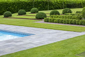 Stone paving around swimming pool, clipped box hedges, Cor-Ten Steel steps in lawn, mounds of Taxus baccata