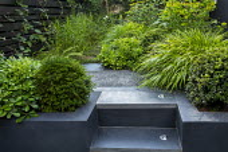 Tiny urban courtyard, Hakonechloa macra, Taxus baccata, Buxus sempervirens, Pittosporum tobira 'Nanum', steps